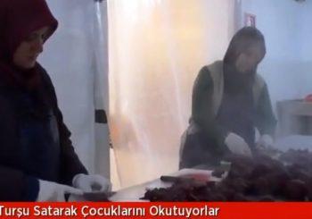 Hanımlar Turşu Kurarak Geçimini Sağlıyor